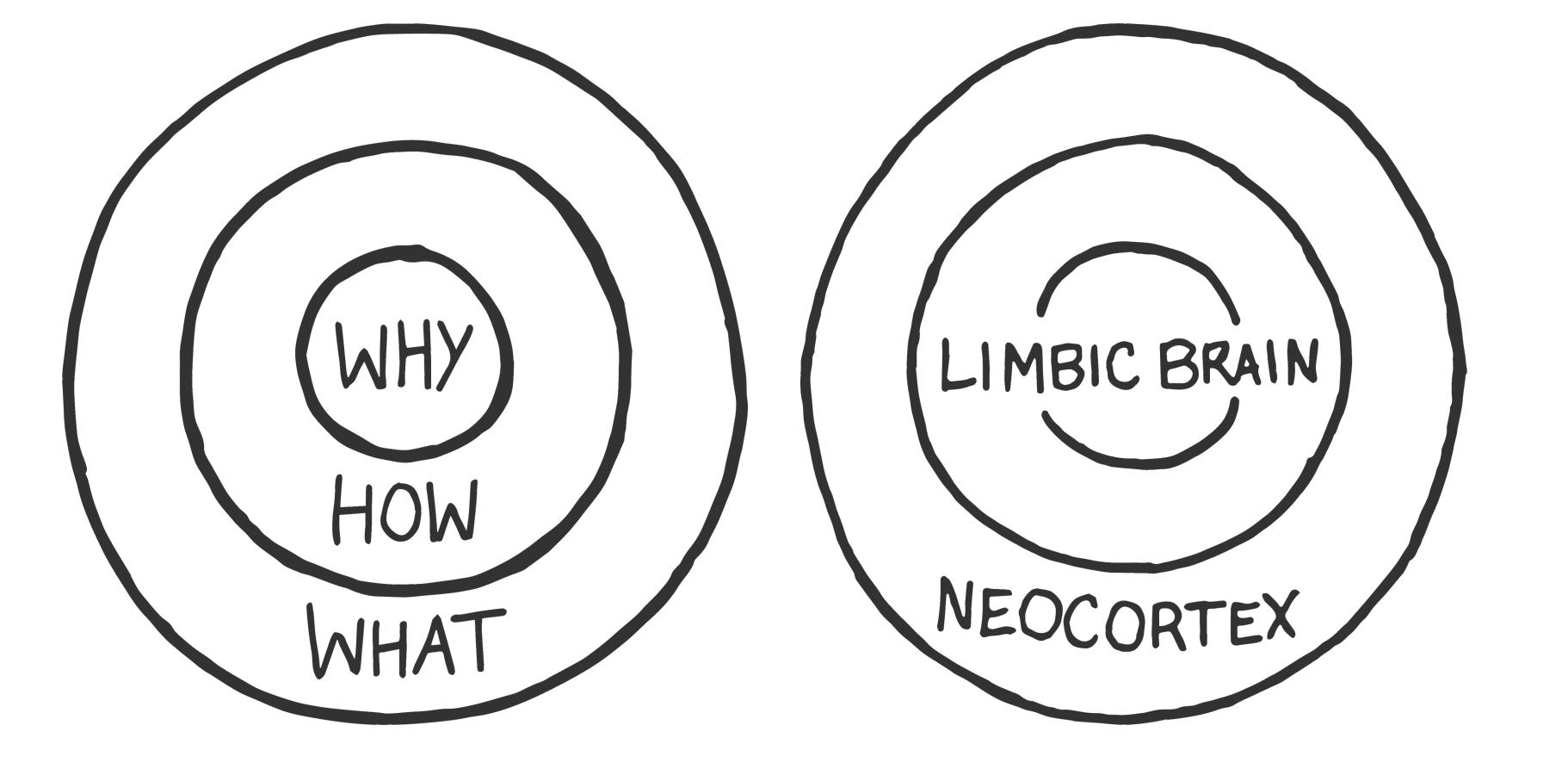 altin-cember-the-golden-circle-limbic-sistem